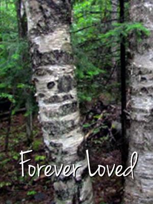Birch Tree Web
