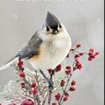 bird winter