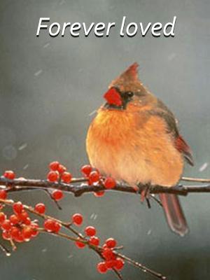 cardinal 2 4